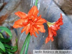 ACAPULCO-MAYO-2009-032-300x225